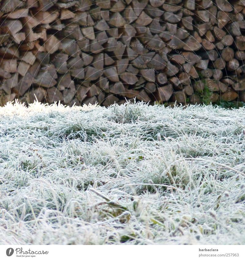 Weiß wie Schnee, schwarz wie Ebenholz Umwelt Natur Winter Eis Frost Baum Gras Holz frieren leuchten ästhetisch frisch kalt natürlich viele braun weiß