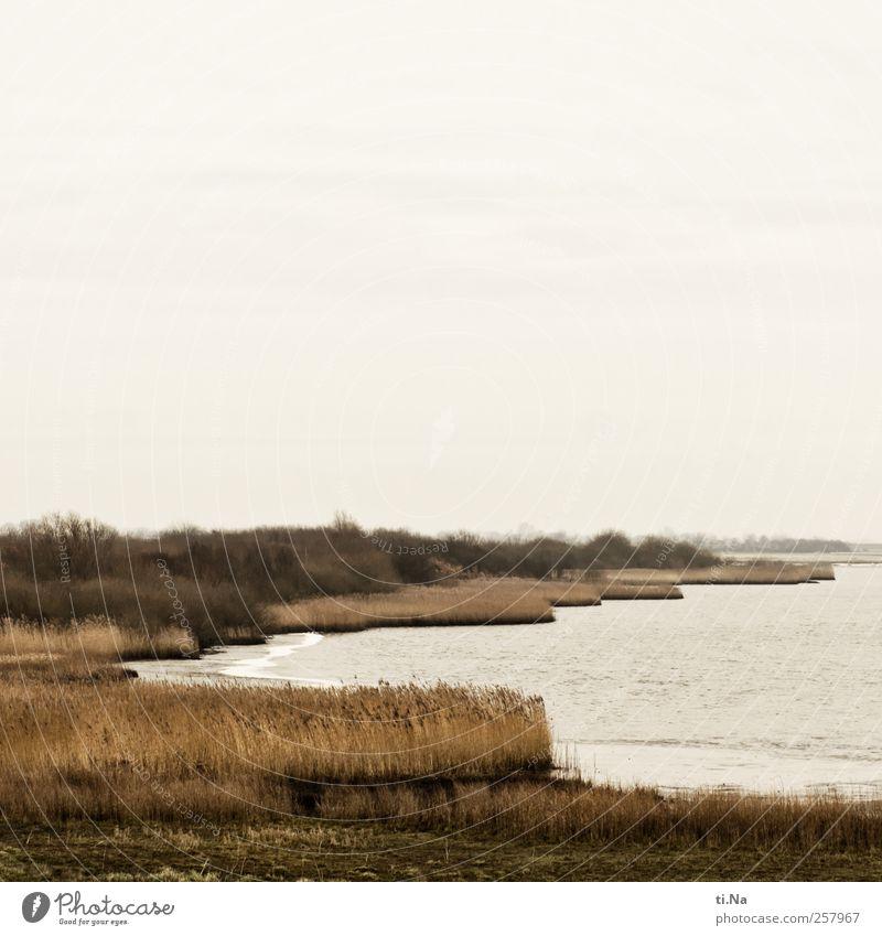 Deichblicke II Natur grün schön Pflanze Winter Tier gelb Erholung Herbst Umwelt Landschaft Küste braun nass natürlich Tourismus
