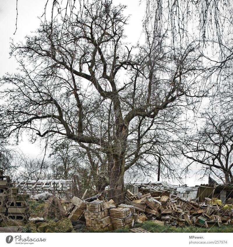 Umweltsch(m)utz II Natur Herbst Pflanze Baum dreckig trist grau bequem ignorant Kiste Holz Müll Umweltverschmutzung Umweltschutz Umweltsünder Umweltschaden karg