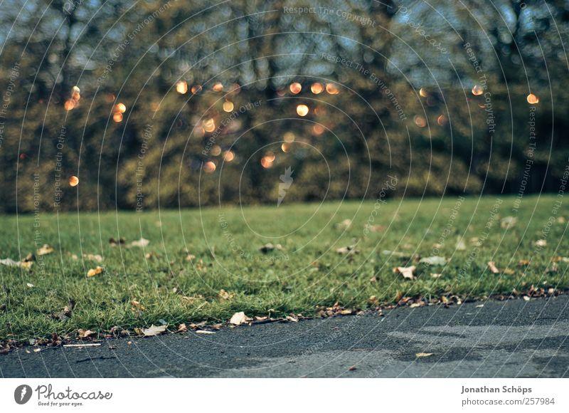 Lichter hinter den Bäumen Natur grün ruhig Herbst Wiese kalt Umwelt Landschaft Gefühle grau Wege & Pfade Lampe Park ästhetisch Sträucher Spaziergang