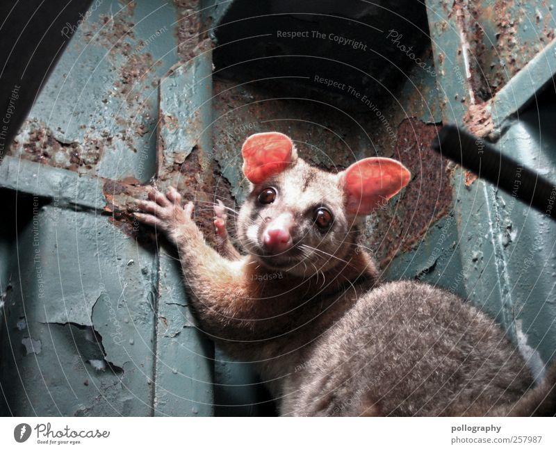 was guckst du? grün Tier klein lachen Metall Tierjunges Angst groß Wildtier Spitze Ohr Tiergesicht Fell Rost Überraschung Pfote
