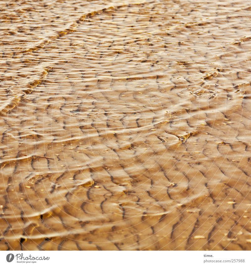 Lebenslinien #38 Umwelt Wasser Wellen Küste Nordsee Wattenmeer Zufriedenheit Bewegung Erholung ruhig Vergänglichkeit Farbfoto Gedeckte Farben Außenaufnahme