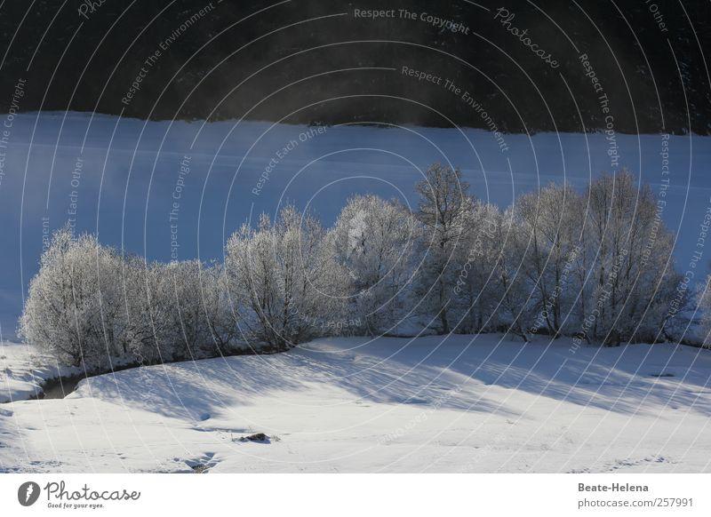 Wintermorgen im Schwarzwald Natur Ferien & Urlaub & Reisen blau schön weiß Baum Einsamkeit Landschaft Freude schwarz Winter kalt Schnee Wege & Pfade Eis glänzend