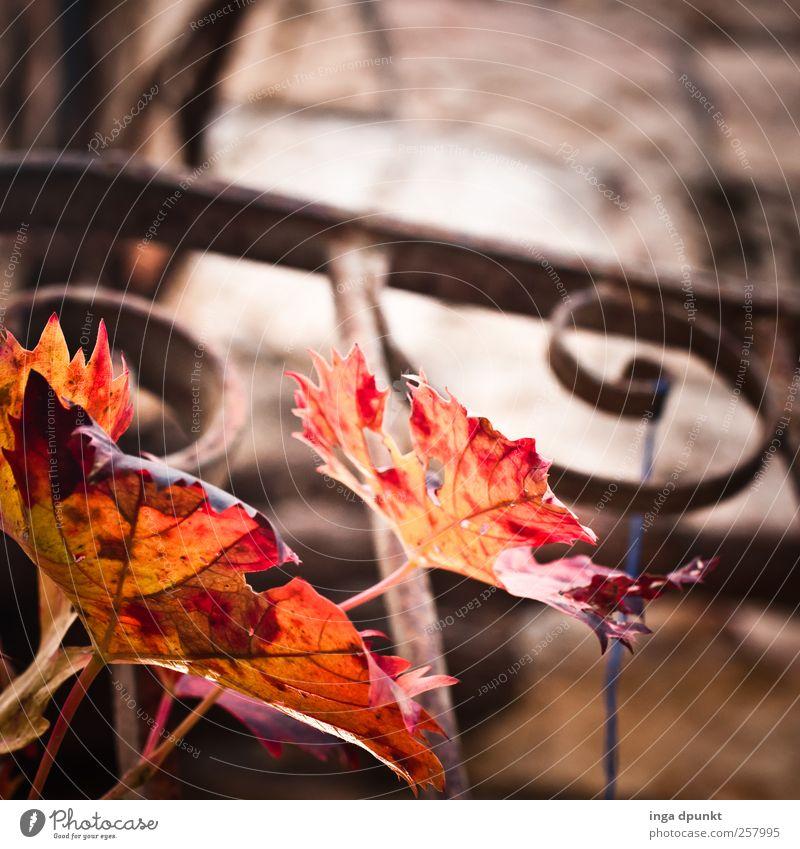 Herbstranke Natur Pflanze Blatt Einsamkeit Herbst Wand Umwelt Garten Wärme Mauer Park Treppe Wachstum Vergänglichkeit Geländer Balkon