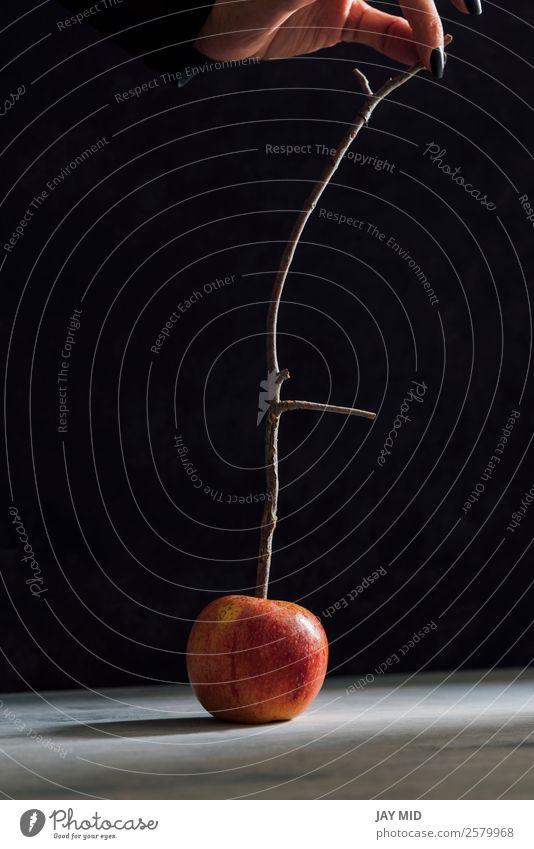 Äpfel und Stäbchen für karamellisierte Äpfel, die Halloween-Äpfel herstellen. Lebensmittel Frucht Apfel Dessert Frau Erwachsene Hand Herbst machen oben