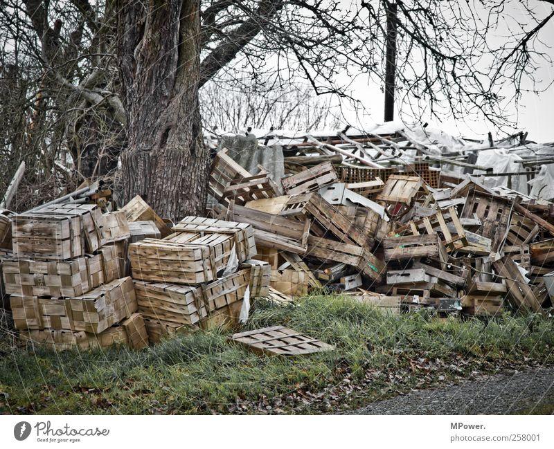 Umweltsch(m)utz III Natur Baum Pflanze Herbst Holz grau dreckig trist Müll Kiste Umweltschutz Gift bewegungslos Umweltverschmutzung bequem