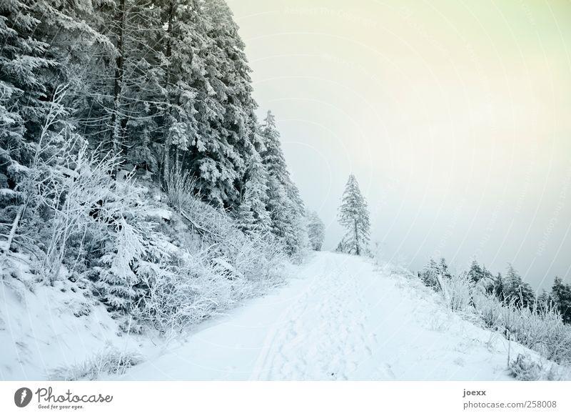 Ist der Weg zu Ende Himmel blau grün weiß Winter Wolken schwarz gelb kalt Schnee Landschaft Wege & Pfade Wetter