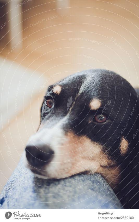 Es ist Zeit Natur Hund blau Tier schwarz Liebe orange warten beobachten Haustier Hose Fell Jeanshose Tiergesicht gemütlich anstrengen