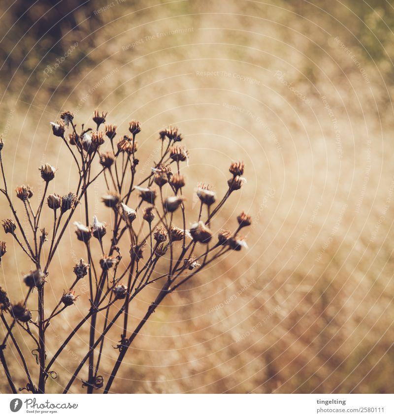 trocken Umwelt Natur Pflanze Sonne Winter Schönes Wetter Sträucher Wildpflanze Wiese berühren Blühend verblüht dehydrieren nah stachelig gelb gold grün orange