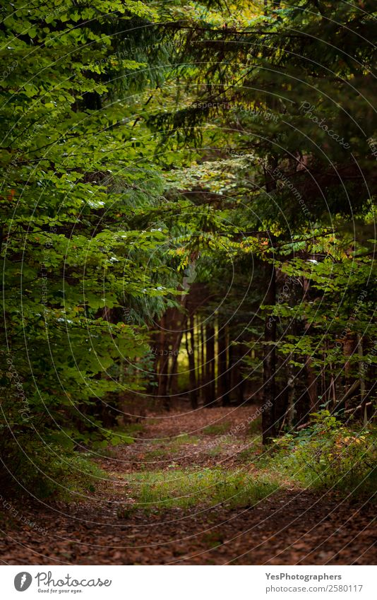 Waldgasse mit umgestürzten Blättern Umwelt Natur Landschaft Herbst Baum Blatt entdecken dunkel Gasse Regie Ökosystem leer fallen umgefallene Blätter Fußweg