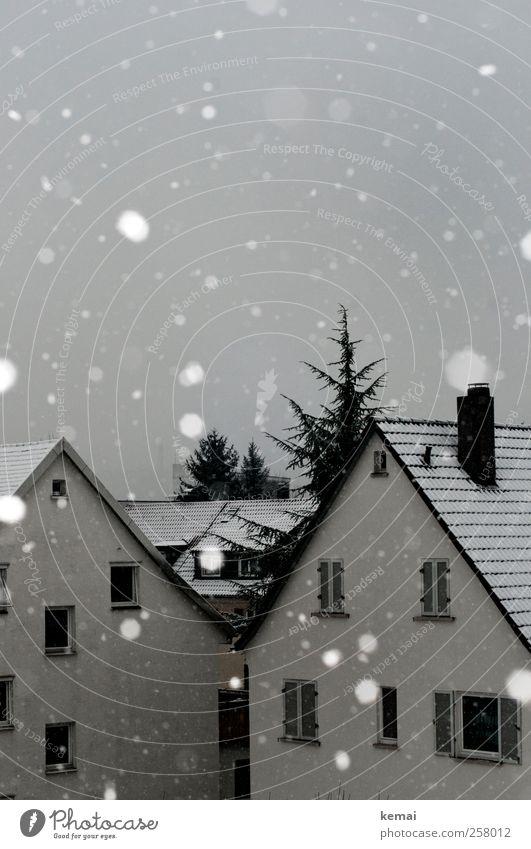 Reicht erstmal Winter schlechtes Wetter Eis Frost Schnee Schneefall Baum Dorf Kleinstadt Haus Einfamilienhaus Fassade Fenster weiß Schneeflocke grau trüb