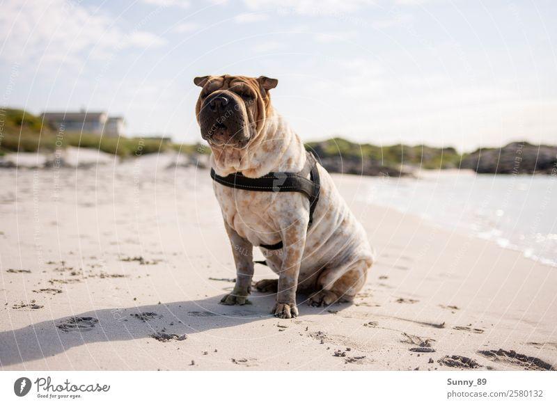 Wanderlust Haustier Hund 1 Tier Sand Wasser genießen Ferien & Urlaub & Reisen leuchten toben Farbfoto Außenaufnahme Menschenleer Tag Reflexion & Spiegelung