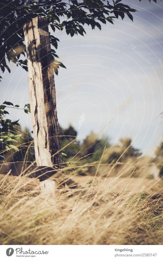 da draußen mit dir. Himmel Natur blau Landschaft Baum Wolken Blatt ruhig gelb Holz Gefühle Gras braun Zufriedenheit Horizont Feld