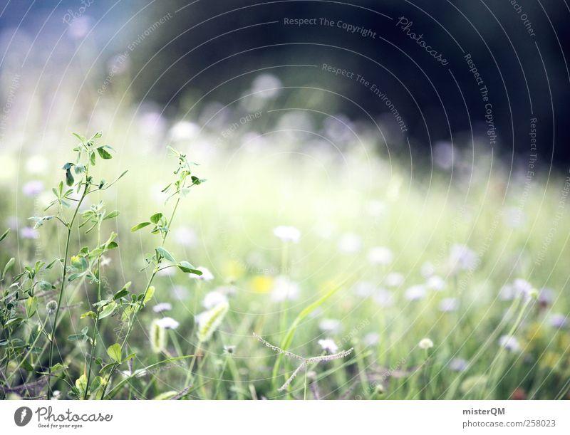 So Flauschig! Natur grün Erholung ruhig Wiese Gras Frühling natürlich Hintergrundbild Kunst Wachstum Idylle frisch ästhetisch fantastisch weich
