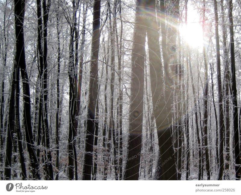 Winterwald Natur Pflanze weiß Sonne Baum Landschaft ruhig Tier Wald schwarz kalt Umwelt Wärme Schnee Holz