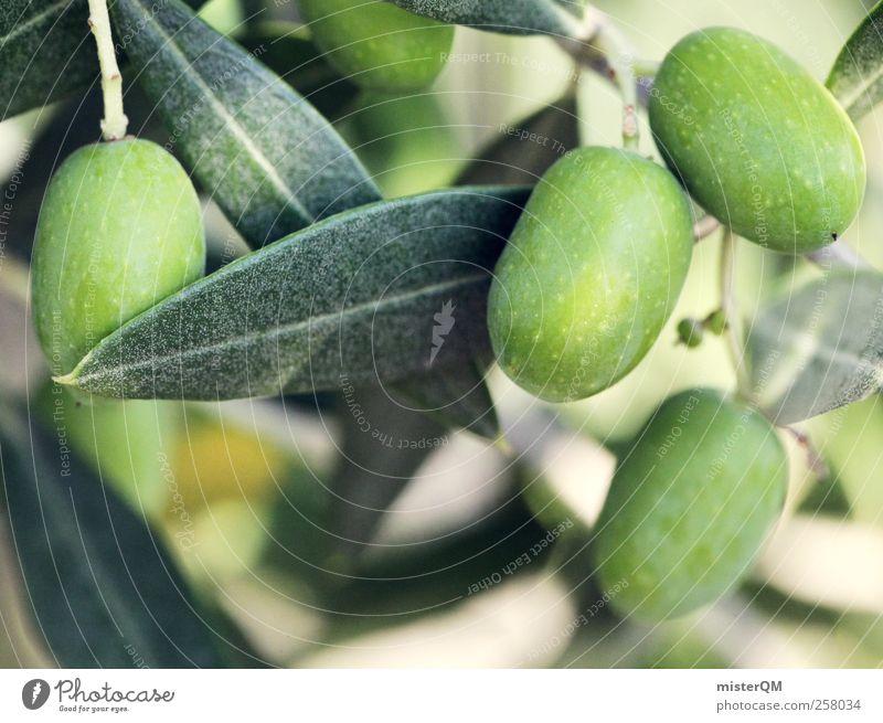 Grünes Gold. Umwelt Natur Landschaft Pflanze Klima Schönes Wetter ästhetisch frisch Wachstum Ernte Oliven Olivenöl Olivenbaum Olivenhain Olivenblatt Olivenernte