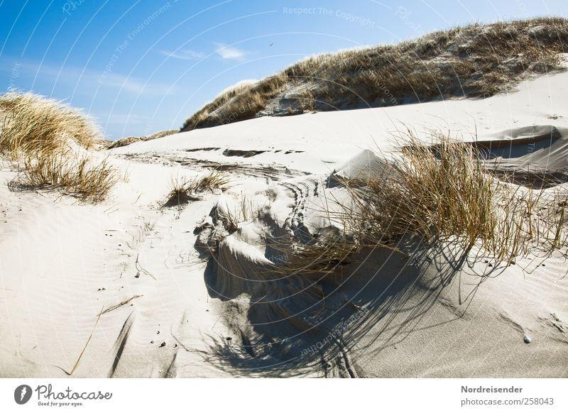 Spiekeroog | Strukturen Natur blau Pflanze Sonne Ferien & Urlaub & Reisen Sommer Strand Leben Landschaft Gras Sand Stimmung Linie braun Wind frisch