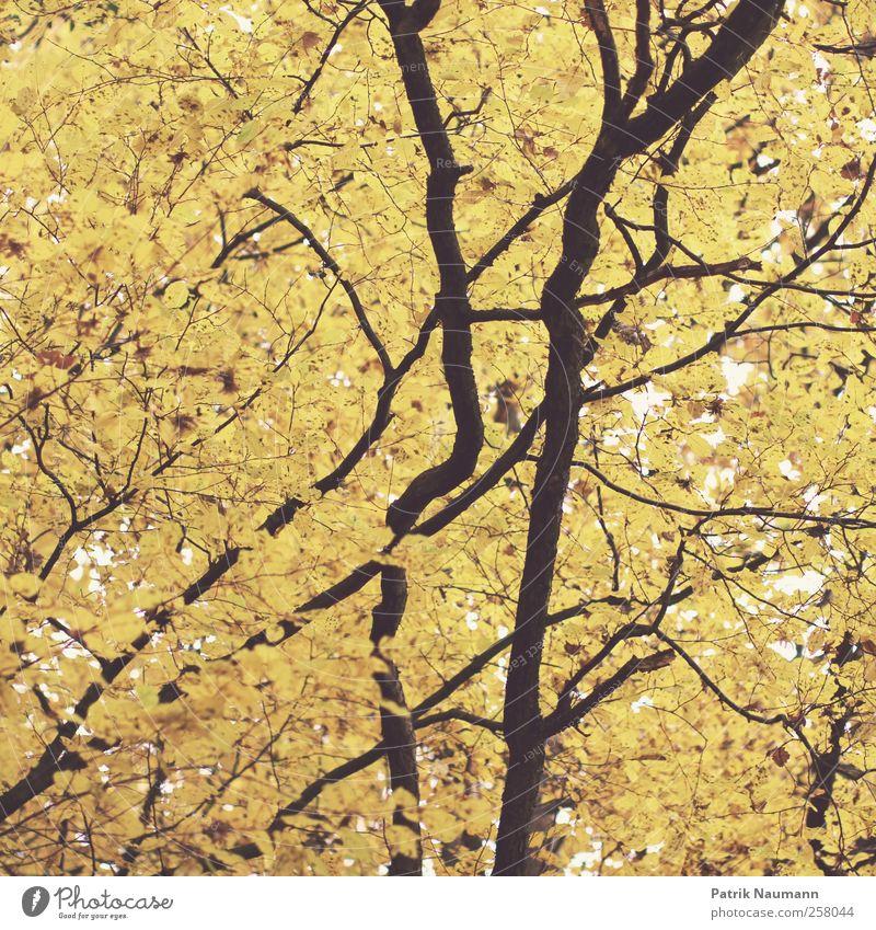 life line Natur alt Baum Blatt Ferne Wald schwarz Umwelt gelb Herbst Stil Linie wild leuchten elegant gold