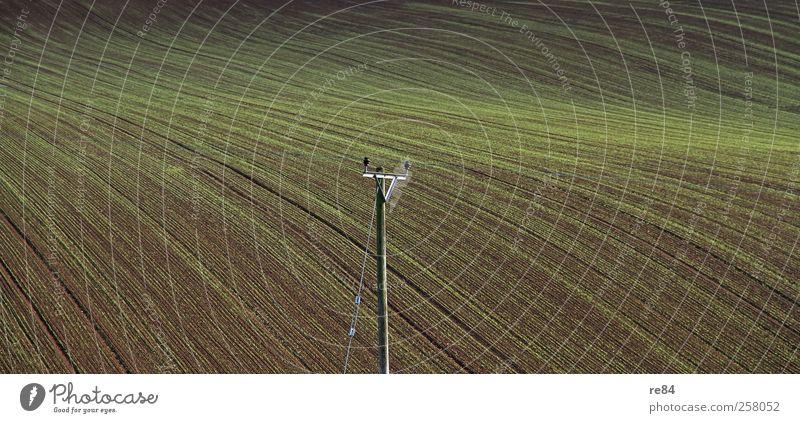Jetzt mal mit Struktur Getreide Ferne Freiheit Sommer Berge u. Gebirge Erntedankfest Gartenarbeit Landwirtschaft Forstwirtschaft Telekommunikation Umwelt Natur