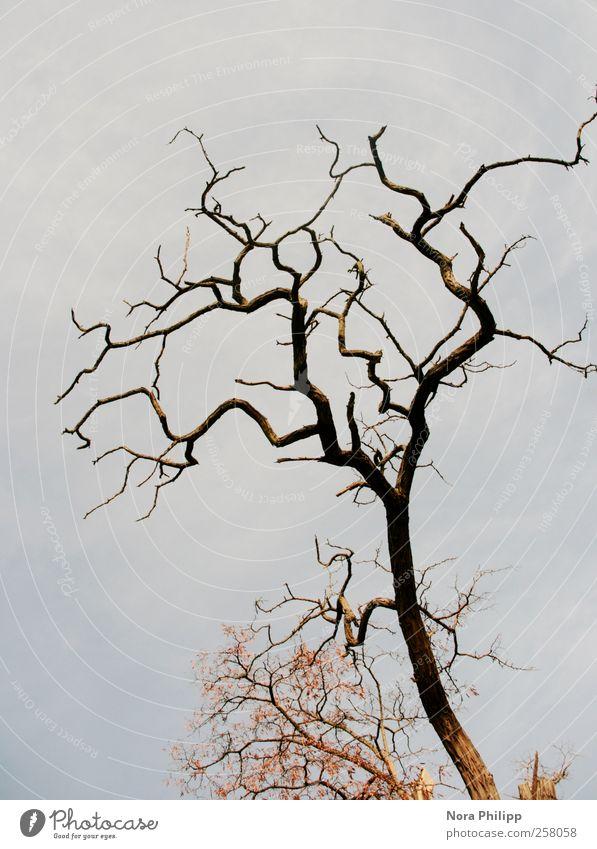 abstract nature art Umwelt Natur Pflanze Luft Wolkenloser Himmel Winter Wetter Baum Blatt Menschenleer Wachstum eckig Traurigkeit Trauer Einsamkeit