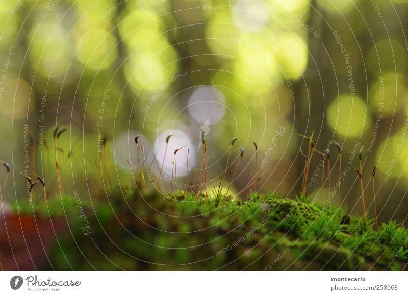 Moonlights Umwelt Natur Pflanze Sonne Herbst Wetter Schönes Wetter Gras Moos Blüte Grünpflanze Wildpflanze Wald Hügel außergewöhnlich authentisch elegant schön