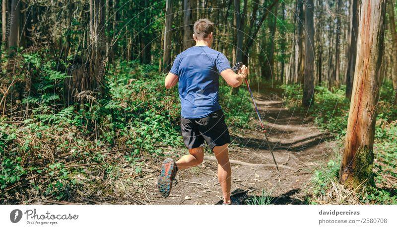 Mann, der am Trail Race teilnimmt Lifestyle Abenteuer Sport Mensch Erwachsene Natur Baum Wald Wege & Pfade Fitness authentisch Geschwindigkeit anstrengen