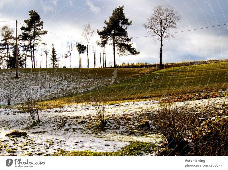 Schnee - oder Schneefrei? Umwelt Natur Landschaft Pflanze Erde Luft Himmel Wolken Sonne Herbst Winter Wetter Schönes Wetter Baum Gras Sträucher Blatt Wiese Feld