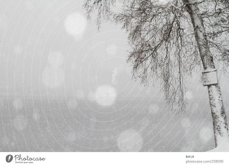 Schnee am See Umwelt Landschaft Pflanze Luft Wasser Himmel Winter Klima Klimawandel Wetter schlechtes Wetter Unwetter Nebel Eis Frost Schneefall Baum Küste