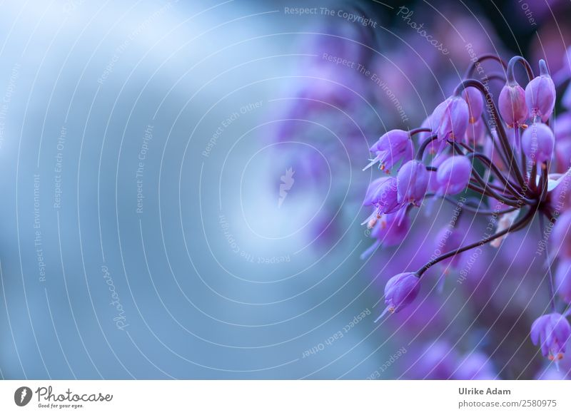 Blüten der wilden Zwiebel Natur Sommer Pflanze Erholung ruhig Innenarchitektur Stil Feste & Feiern Design Zufriedenheit Dekoration & Verzierung Geburtstag