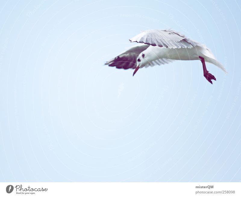 what? Tier ästhetisch Vogelperspektive Möwe Möwenvögel Neugier Blick fliegen Schweben Flügel innehalten stoppen Momentaufnahme entdecken Nahrungssuche