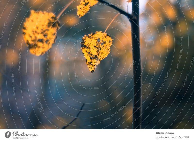 Herbstliches Laub Natur Pflanze blau Baum Blatt Wald dunkel Wärme gelb Traurigkeit Tod braun Design Vergänglichkeit Wandel & Veränderung