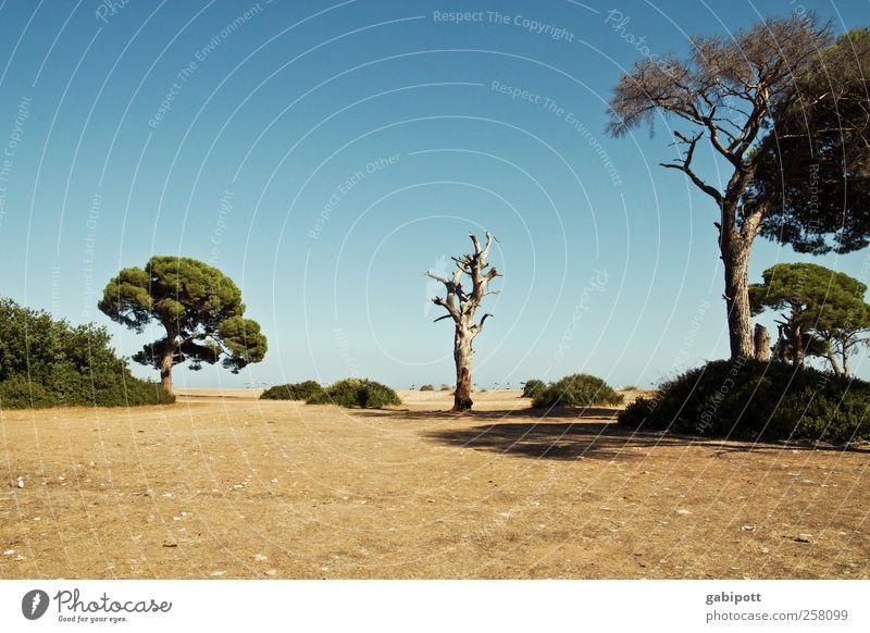Cirali - Türkei Natur Ferien & Urlaub & Reisen blau Pflanze Sommer Baum Erholung ruhig Strand Ferne Umwelt Freiheit Tourismus Schönes Wetter Abenteuer Sehnsucht