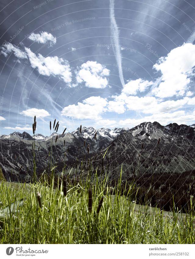Allgäu Umwelt Natur Landschaft Alpen blau grün Allgäuer Alpen Oberstdorf Fellhorn Gras Berge u. Gebirge Himmel Farbfoto Gedeckte Farben Außenaufnahme