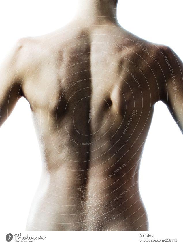 Anatomie Mensch sportlich Torso Rücken Rückenmuskulatur Rückenschmerzen Wirbelsäule Muskulatur Farbfoto Gedeckte Farben Innenaufnahme Studioaufnahme Freisteller