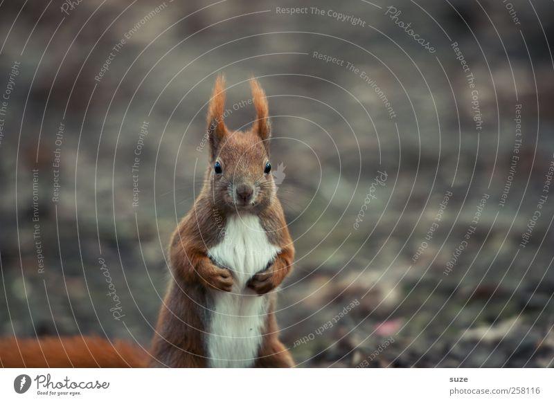 Profiboxer im Fliegengewicht Natur Pflanze Tier Umwelt Herbst lustig grau klein braun wild Wildtier Klima niedlich Coolness Neugier Fell