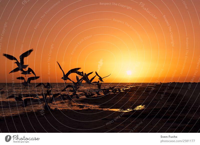 Vögel bei Sonnenuntergang am Strand ruhig Ferien & Urlaub & Reisen Sommer Meer Natur Landschaft Pflanze Tier Sand Wasser Wolken Horizont Sonnenaufgang Vogel