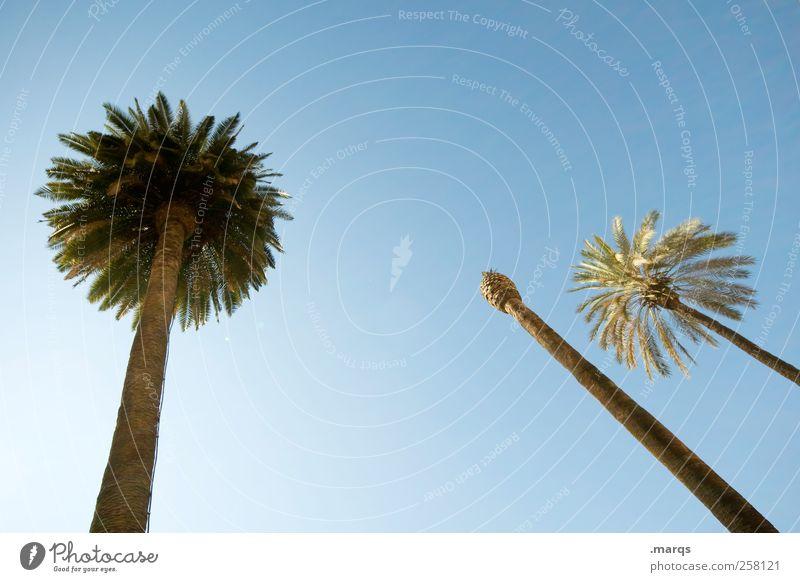 Kopflos exotisch Wohlgefühl Ferien & Urlaub & Reisen Tourismus Ferne Sommerurlaub Wolkenloser Himmel Schönes Wetter Palme Zeichen träumen frisch schön