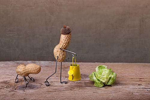 Simple Things, Gartenarbeit Mensch Hund grün Pflanze Freude Tier gelb Ernährung Lebensmittel Holz lustig braun Zusammensein Arbeit & Erwerbstätigkeit gehen