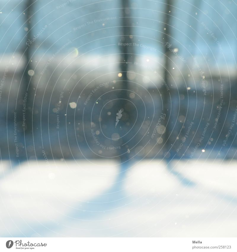 Es schneit Umwelt Natur Luft Winter Schnee Schneefall Baum Baumstamm fallen glänzend kalt natürlich blau Klima ruhig Zeit Schneeflocke Farbfoto Außenaufnahme