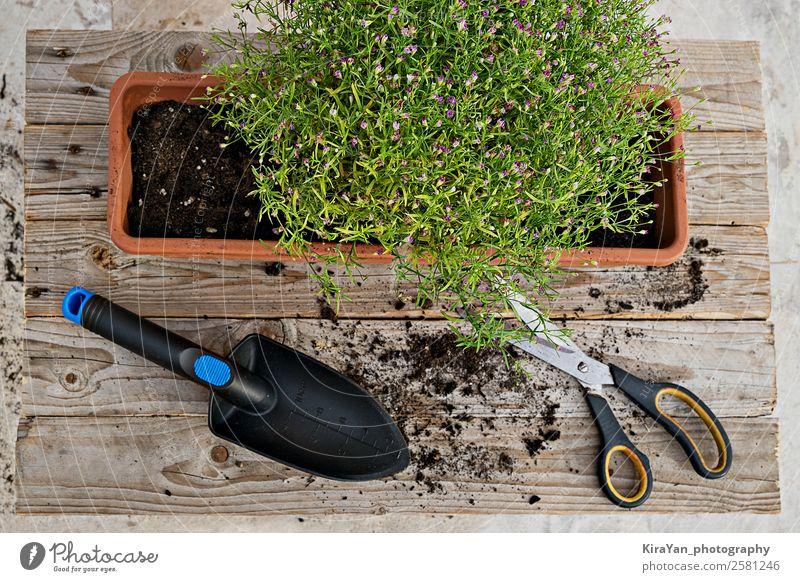 Draufsicht auf die Gartenarbeit und die Pflanze Topf Stil Sommer Dekoration & Verzierung Tisch Arbeit & Erwerbstätigkeit Werkzeug Schere Natur Erde Herbst Blume