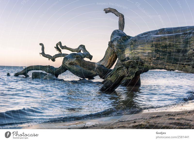 alter, verwitterter Baum am Strand Natur Pflanze Wasser ruhig Winter natürlich Küste außergewöhnlich Horizont Wellen liegen Kraft ästhetisch