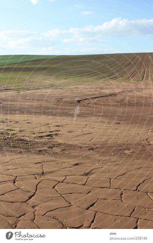 wasser ! Umwelt Natur Landschaft Pflanze Urelemente Erde Wasser Himmel Wolken Horizont Sonnenlicht Sommer Klima Klimawandel Schönes Wetter Nutzpflanze Feld