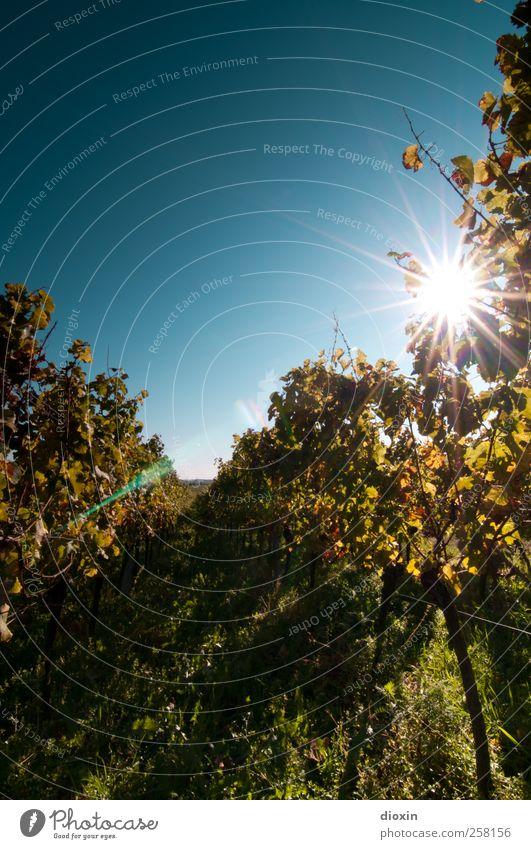 always look on the bright side of life! Himmel Natur Pflanze Sonne Landschaft Umwelt Herbst Wetter Wachstum leuchten Klima Schönes Wetter Landwirtschaft Wein Wein Wolkenloser Himmel