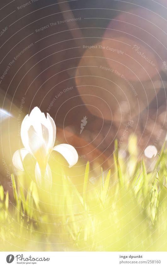 Frühlingsboten Umwelt Natur Landschaft Pflanze Wasser Wassertropfen Sonne Sonnenlicht Wetter Schönes Wetter Wärme Blume Gras Blüte Wildpflanze Veilchengewächse