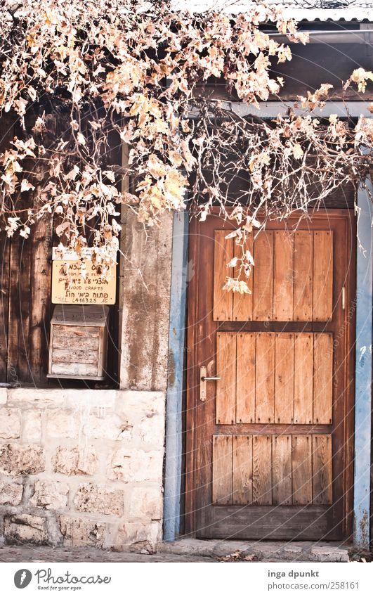 Herbstlich Pflanze Blatt ruhig Haus Umwelt Wand Wärme Herbst natürlich Gebäude Mauer Holz Wohnung Zufriedenheit Tür ästhetisch