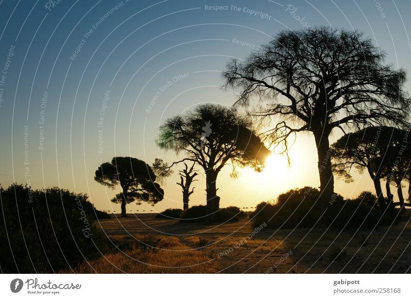 Cirali - Türkei II Wellness Sinnesorgane Erholung ruhig Meditation Ferien & Urlaub & Reisen Tourismus Abenteuer Ferne Umwelt Natur Landschaft Wolkenloser Himmel