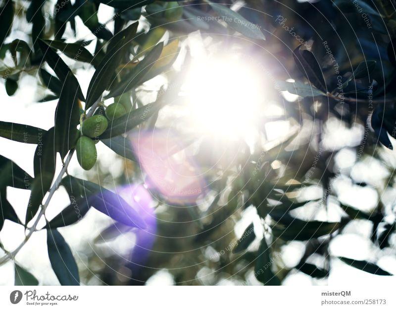 mediterraneo. Umwelt Natur Landschaft Pflanze ästhetisch Bioprodukte Oliven Olivenbaum Olivenhain Olivenblatt Olivenernte reif ökologisch grün Gesundheit