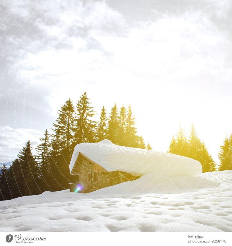 hüttenzauber Natur Baum Pflanze Sonne Ferien & Urlaub & Reisen Winter Tier Haus Schnee Umwelt Landschaft Berge u. Gebirge Freizeit & Hobby Wohnung Ausflug