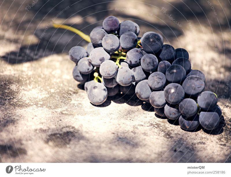Gaumenfreud. Natur ästhetisch Wein Weinberg Weintrauben Weinlese Weinbau Rotwein Beeren lecker Zutaten Rohstoffe & Kraftstoffe edel Gesundheit Farbfoto