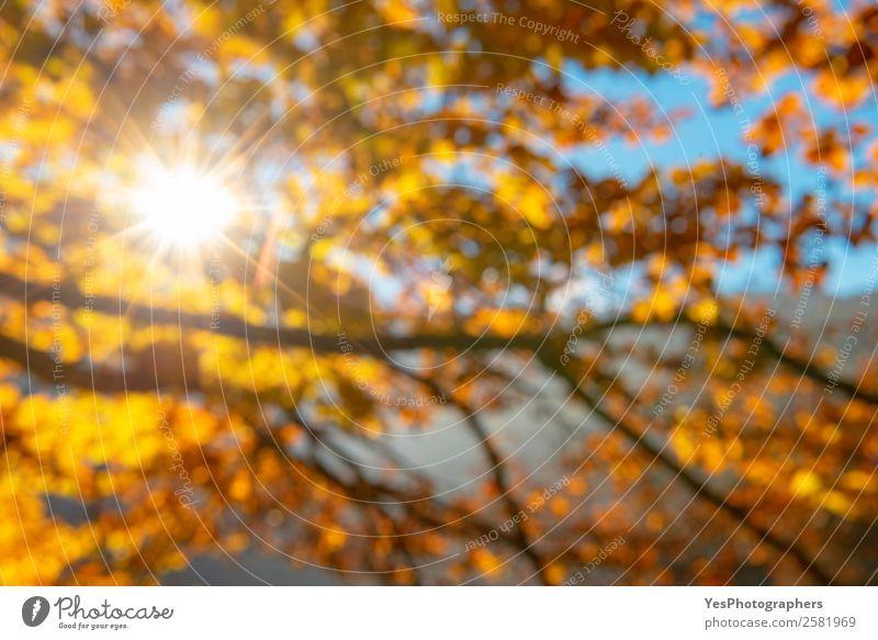 Natur Farbe Blatt gelb Herbst Umwelt natürlich Design hell gold Schönes Wetter Jahreszeiten Postkarte Tapete Konsistenz Atmosphäre
